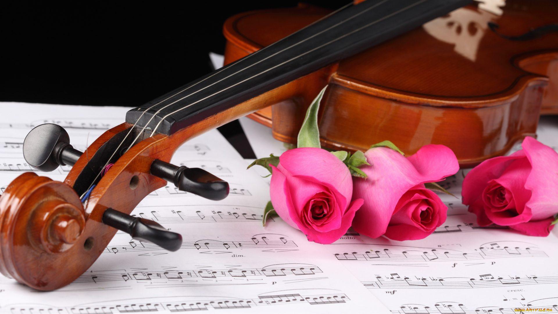 фото скрипки с нотами один совет